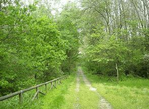 Correggere la respirazione con un bagno nel bosco